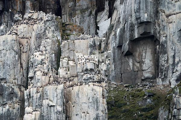 Bird Cliffs Svalbard Norway 2018