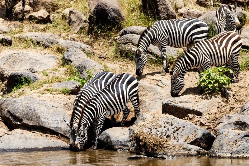 Kenya 2015-04650.jpg