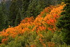 Autumn colors on Mount Rainier, WA. © 2005 Kenneth R. Sheide