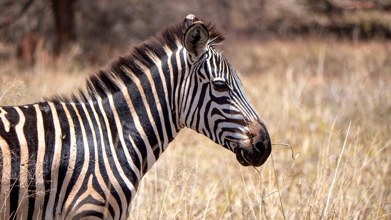 Tanzania-Tarangire-National-Park-Safari-Zebra-04.jpg