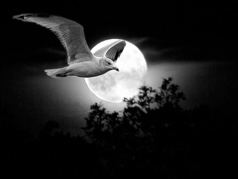 MCC4 Jean McManus Moonlight Flight.jpg