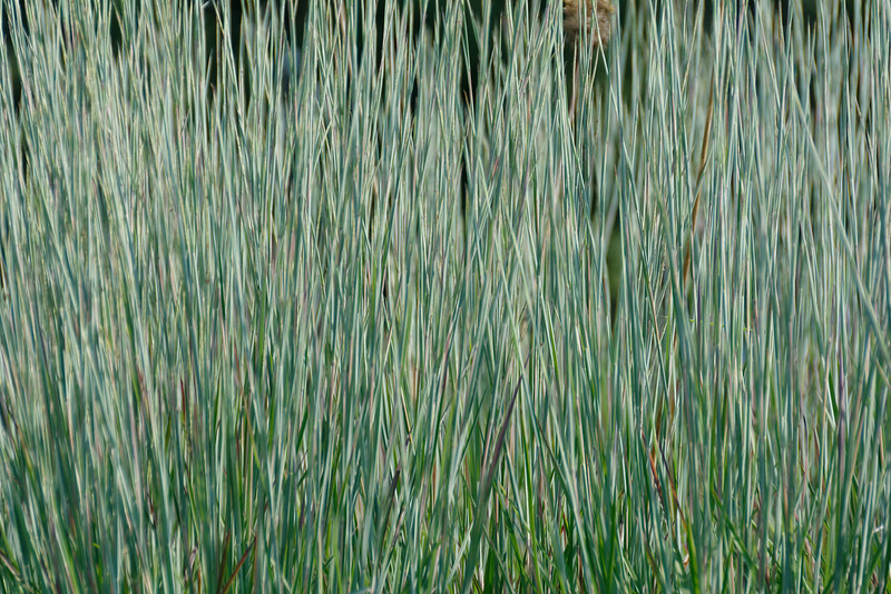 Standing Ovation Grass (2).jpg