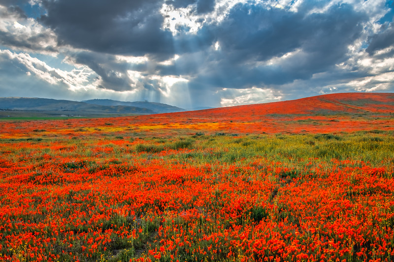 Poppy Reserve Spring Symphony #1 Antelope Valley Poppy Reserve Spring Storm God Rays Wild Flowers Super Bloom Fine Art Landscape Nature Photography!    California Wildflowers Superbloom!  Elliot McGucken Fine Art Landscape Nature Photography & Luxury Wall Art