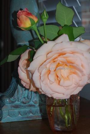 2008-05-06 Florals