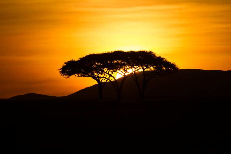 Silhouette of mountain with trees at sunset - East Africa - Tanzania
