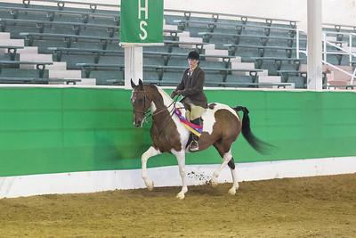 179 - Reg. American Saddlebred Country Pleasure Hunter Stake