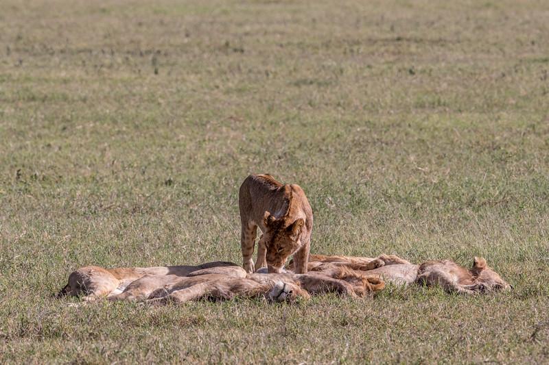 Tanzania_Feb_2018-10.jpg