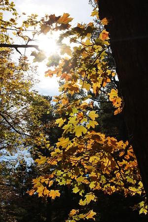 October 15 2016 :: Mackenzie King Estate, Gatineau Park