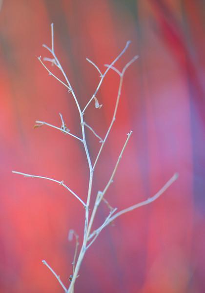 dry-branch.jpg