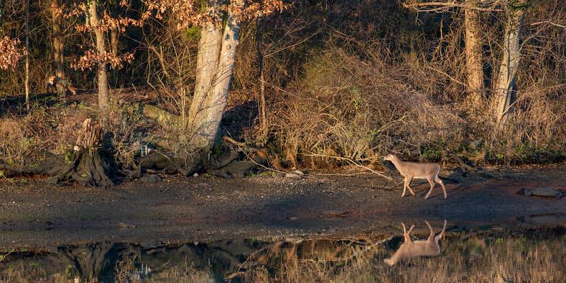 Christmas Deer and Fox