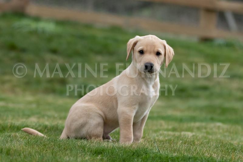 Weika Puppies 24 March 2019-6613.jpg