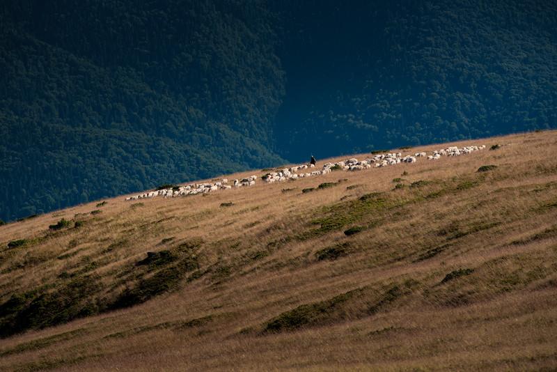Muntele Mic (72).jpg