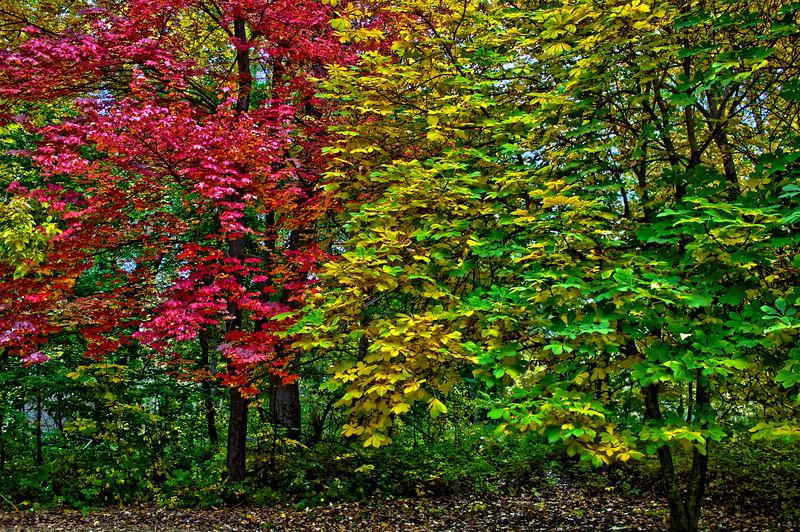 Fall_Colors_HDR10.jpg