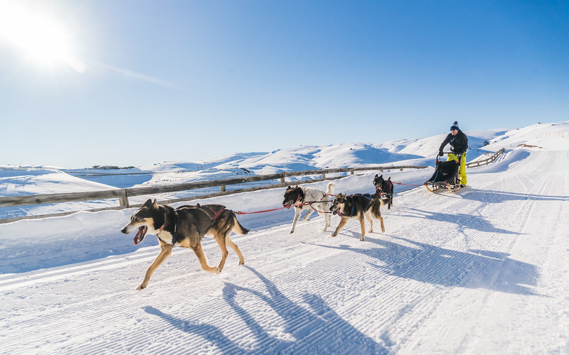 david-dog-sledding-snowfarm-new-zealand.jpg