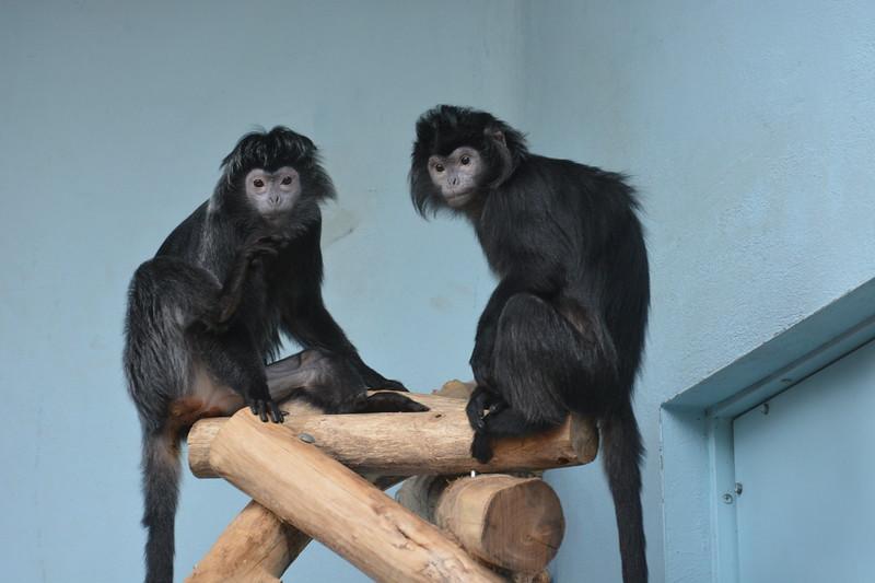 20180624 Antwerpen Zoo GVW_9307.JPG