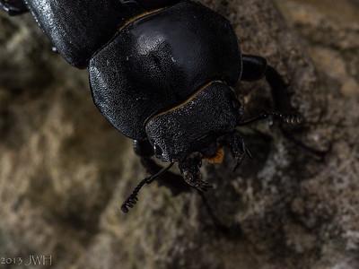 2013 bugs