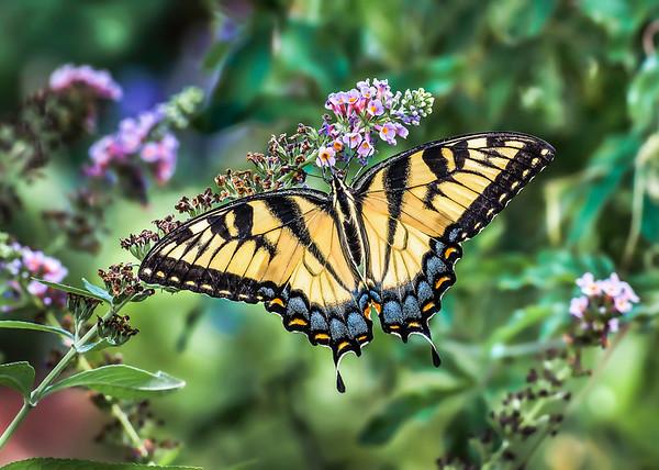 Texas - Butterflies, Bees and Hummingbirds