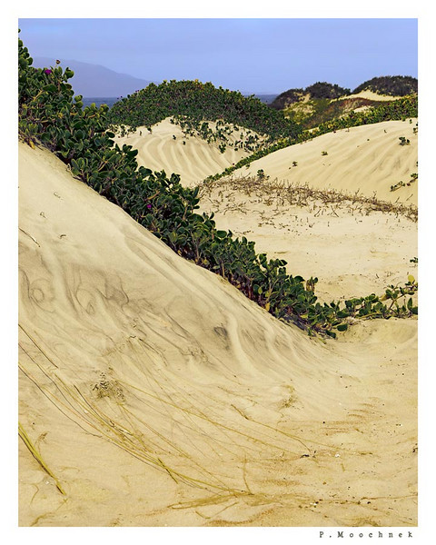 Follow The Dunes To The Beach