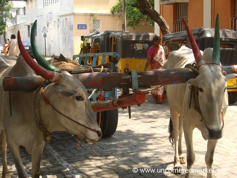 Good Horns - Pondicherry, India