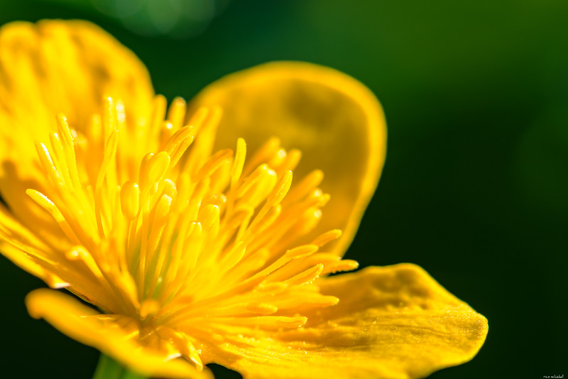 Yellow filaments
