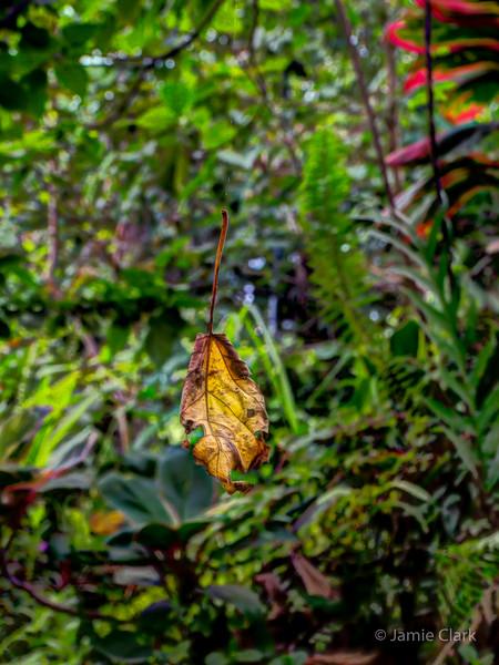 Jungle. Pahoa, Hawaii