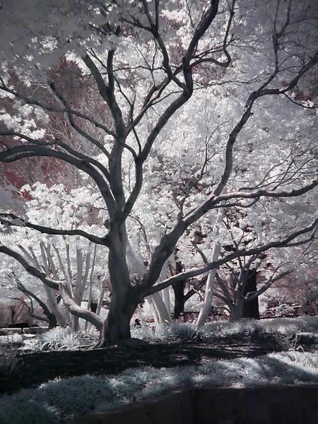 Red_Black_Trees.jpg