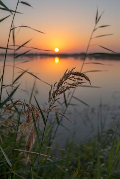 Desert Oasis - Seih Al-Salem Nature Reserve/ Al Qudra Lakes, UAE.