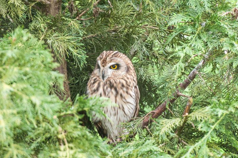 British Wildlife Centre -2941.jpg
