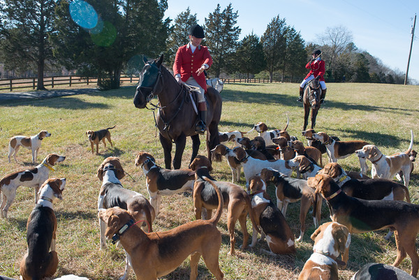 DRHC New Year's Day Hunt 2015