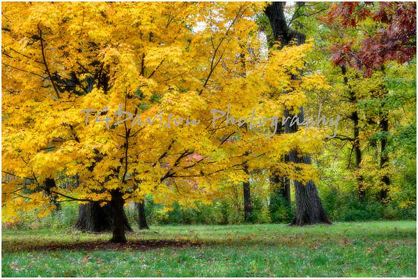 Morton Arboretum Fall Colors 2019