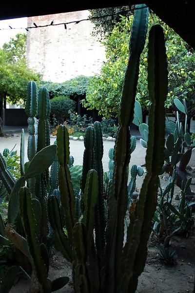 AvilaAdobe012-CactiInCourtyard-2006-11-13.jpg