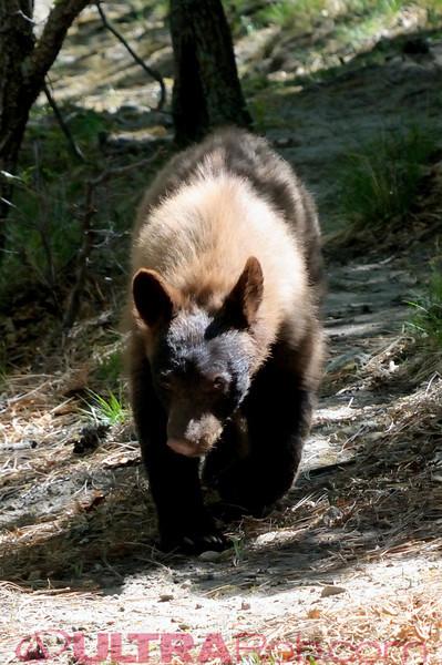 Bear Cub May 5th 2012
