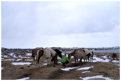 Iceland 2015 (2)
