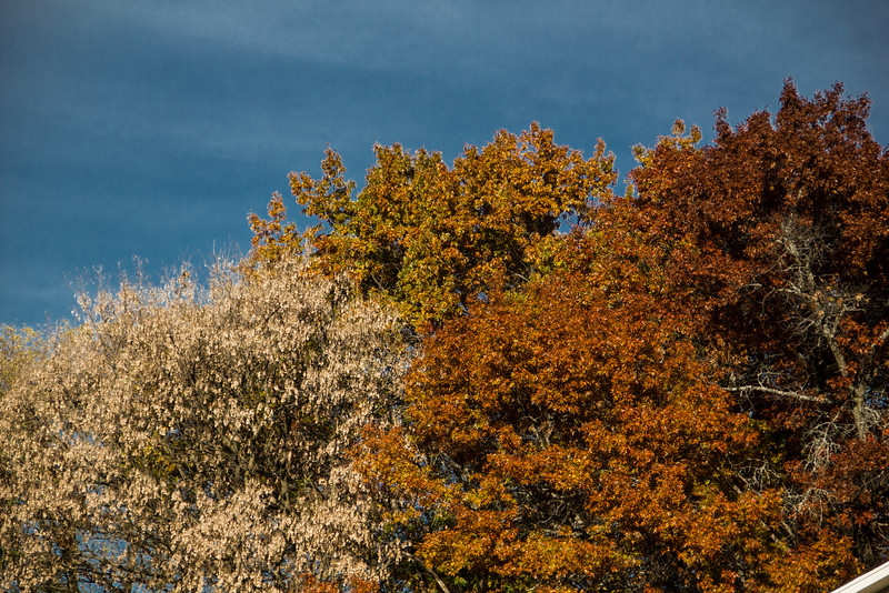Late Fall Color-4.jpg