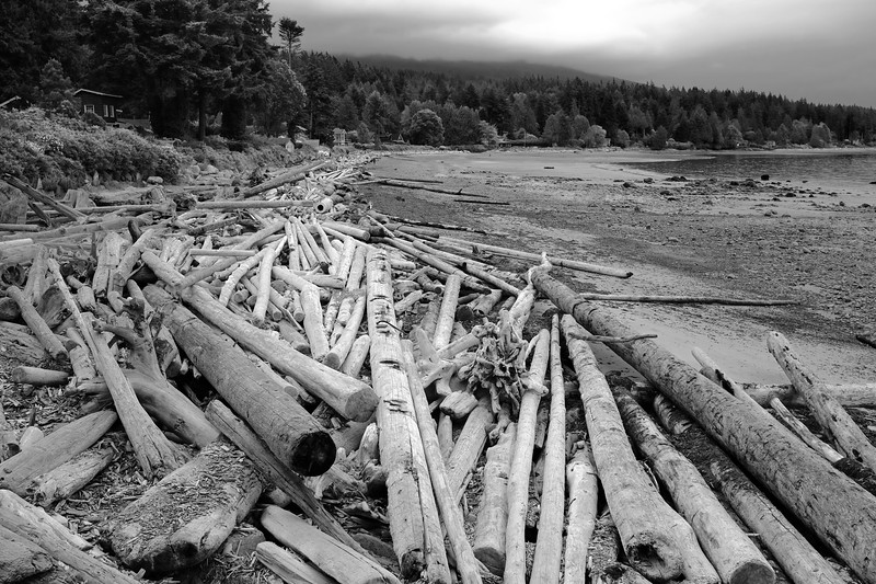 Driftwood 2.jpg