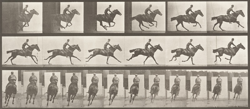 Horse Bouquet galloping, saddled with rider (Animal Locomotion, 1887, plate 633)