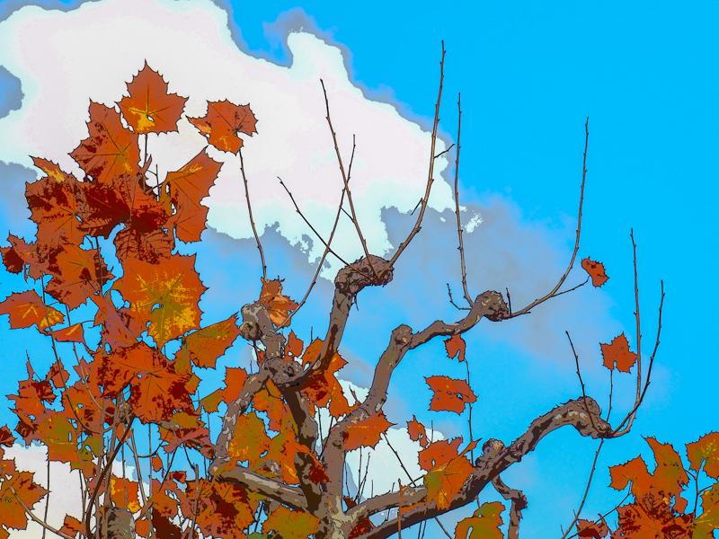 November 28 - Autumn leaves among unique trrees.jpg