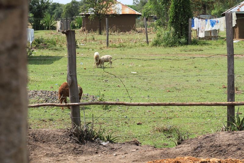 Kenya Part1 '15 1041.JPG