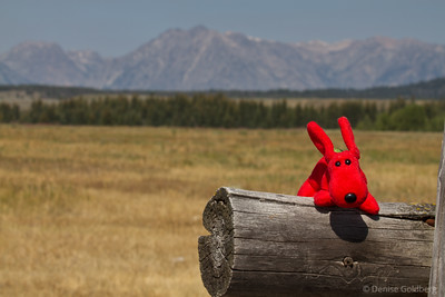 Rover at Grand Teton National Park