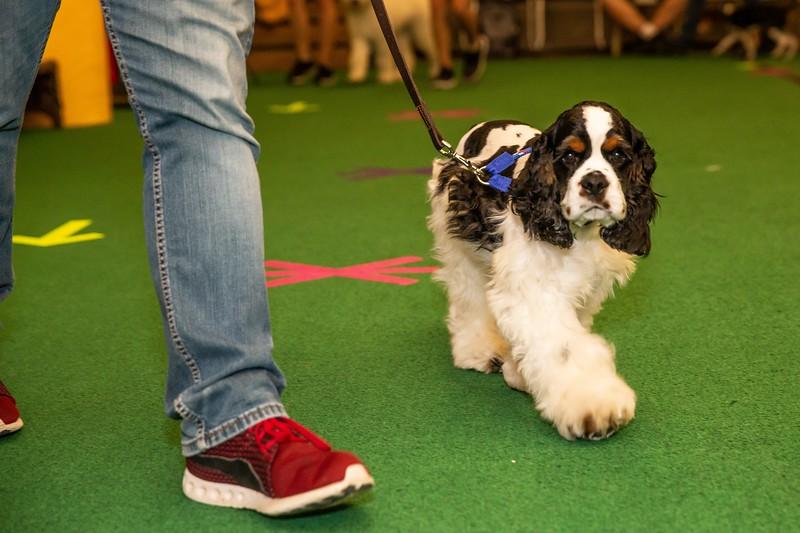 on Command dog Training June 2019-5116.jpg