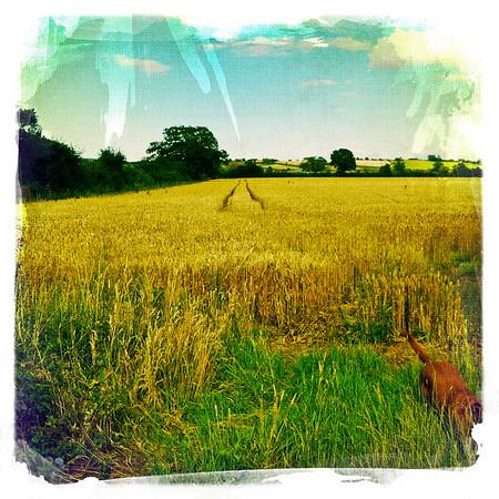 Stalbridge: Cribhouse Farm