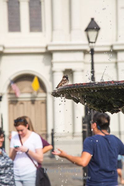 Fountain at St. Louis Cathedral