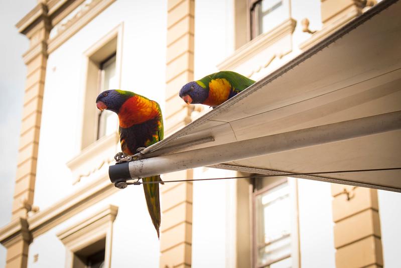 Australia 2015_4.jpg