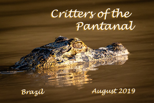 Critters of the Pantanal 2019