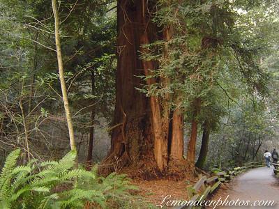 Parc naturel de Muir Woods