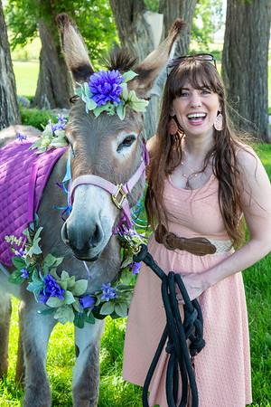 Phil & Sarah Donkeys