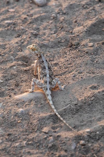 Namibia 69A9302.jpg