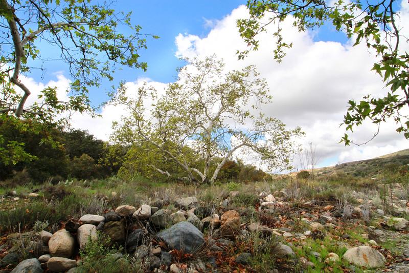 32633-Trabuco-Canyon-Rd-Mitchell-East-Trabuco-Canyon_90.JPG
