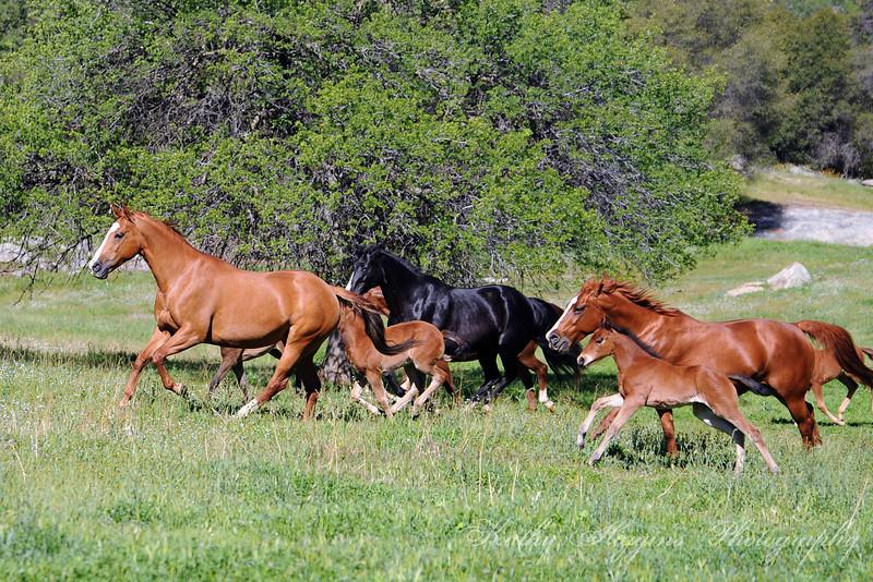 Fairlea 2014 (Mares & Foals)