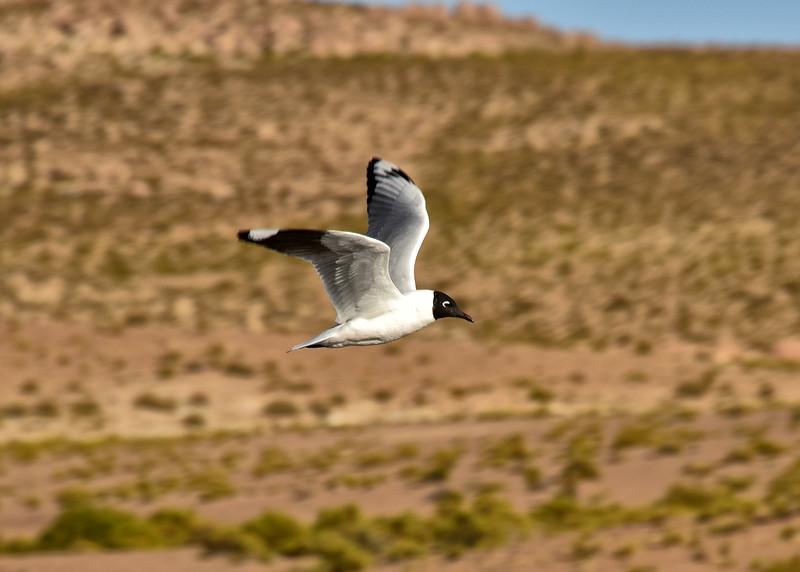 BOL_2780-7x5-Bird.jpg